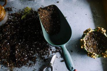 Zkušený chilli pěstitel se podělil 3 o věci! Recept na jednoduchou omáčku, rady, co dát do truhlíku pro příští výsadbu a názor na chilli a hubnutí.